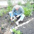 Kaye planting