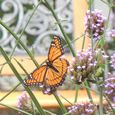 Monarch butterfly and bench